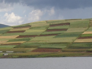 Grain Fields in Peru, Taken by Helen During her Trip